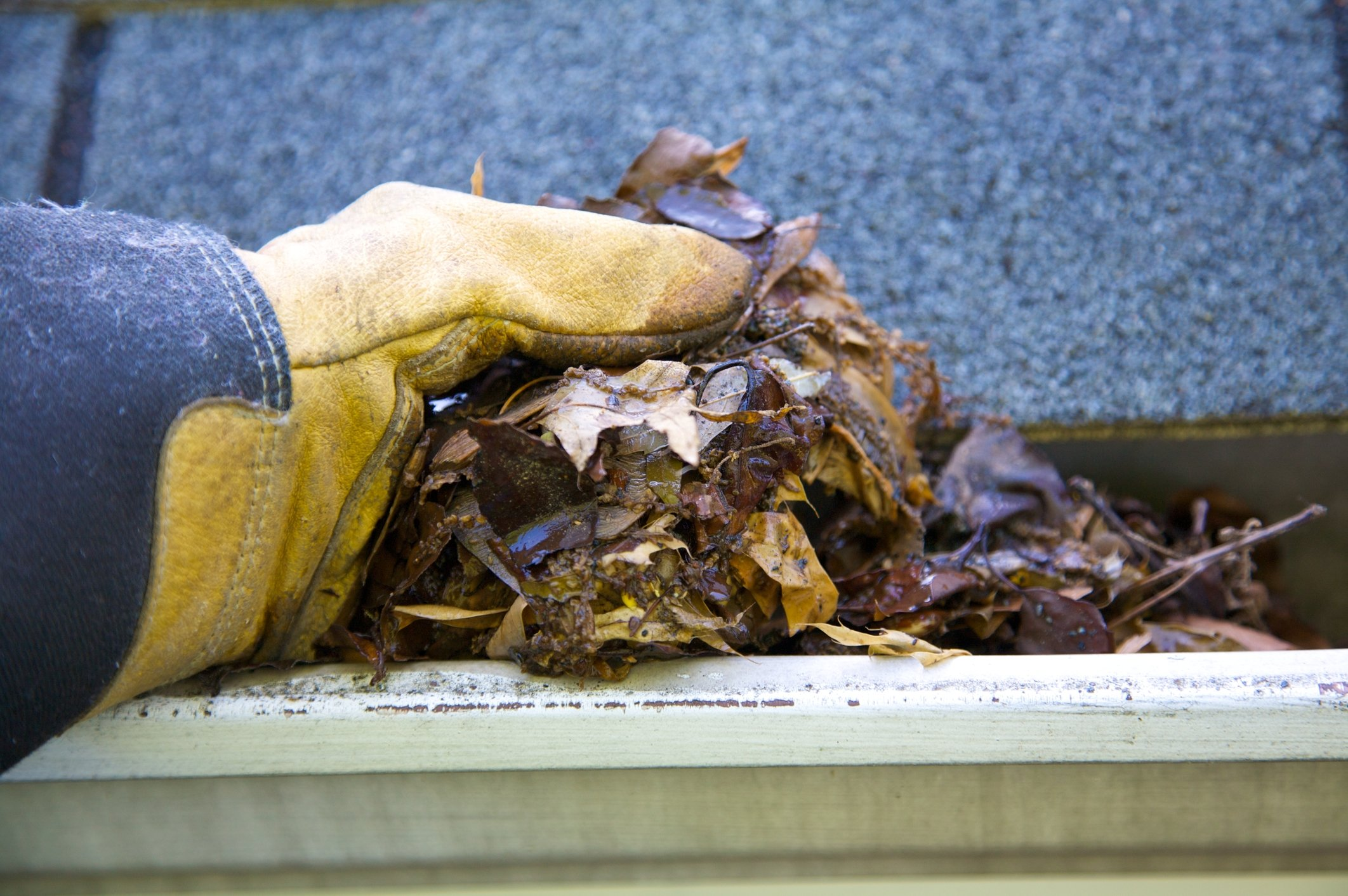 fall-cleanup-leaves-in-gutter-5299933