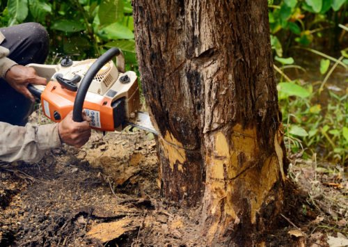 man-with-chainsaw-cutting-the-tree-43887358